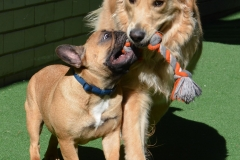 Lovely play mates